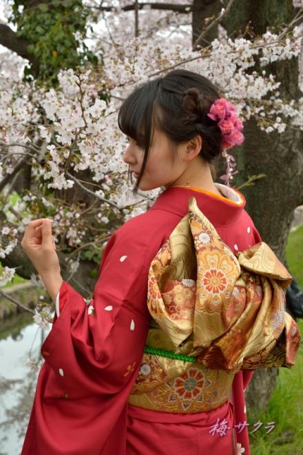 小江戸川越桜祭り2(5-2)変更済