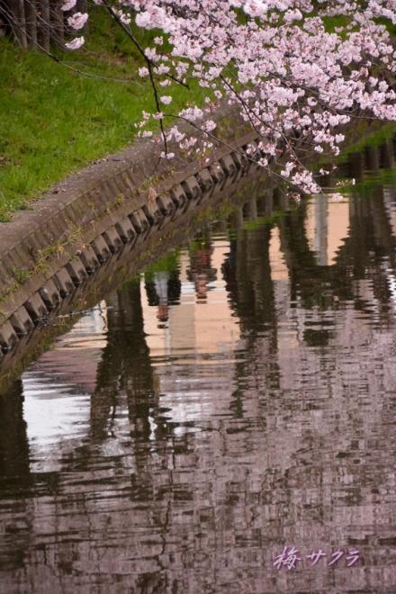 小江戸川越桜祭り2(7-1)変更済