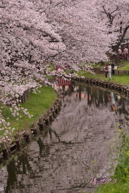 小江戸川越桜祭り2(7-2)変更済