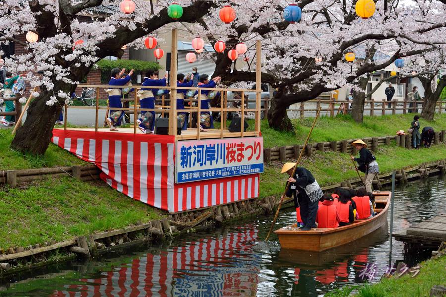 小江戸川越桜祭り3(5)変更済