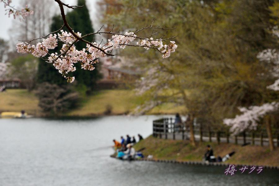 田貫湖9変更済