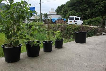 鳴瀧窯の菜園群