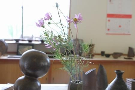 秋の花、今年初