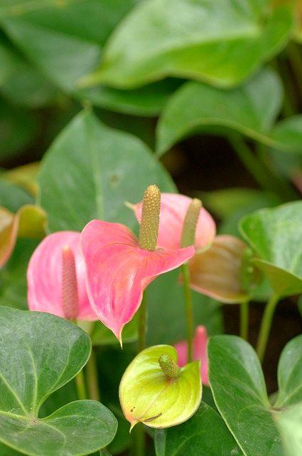 佐野植物公園の花たち