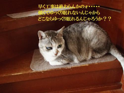 P6160574_convert_20160617095309.jpg