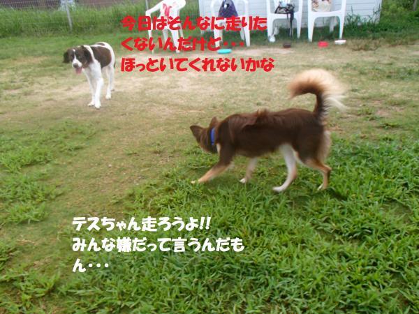 P8270472_convert_20160828093411.jpg
