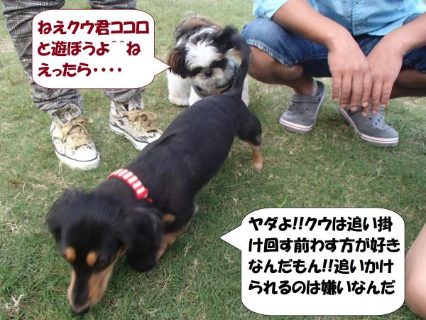 PA011025_convert_20161004094827.jpg