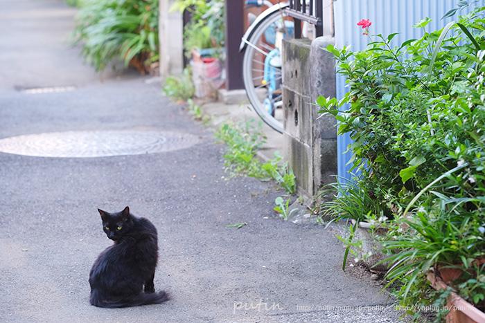 putin_owner_nekoyuhi16102286.jpg