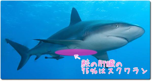 ニキビ跡・鮫の肝臓の75%はスクワラン