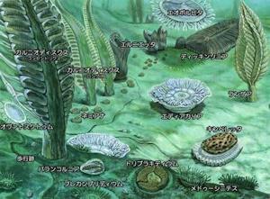 エディアカラ生物群