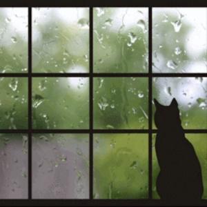 9月の雨です