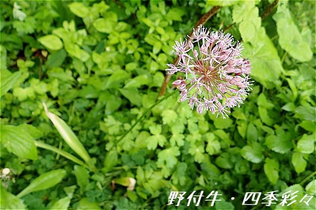 s-O20160604-152401-0.jpg