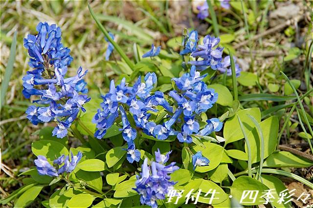 s-P20160421-122701-0.jpg