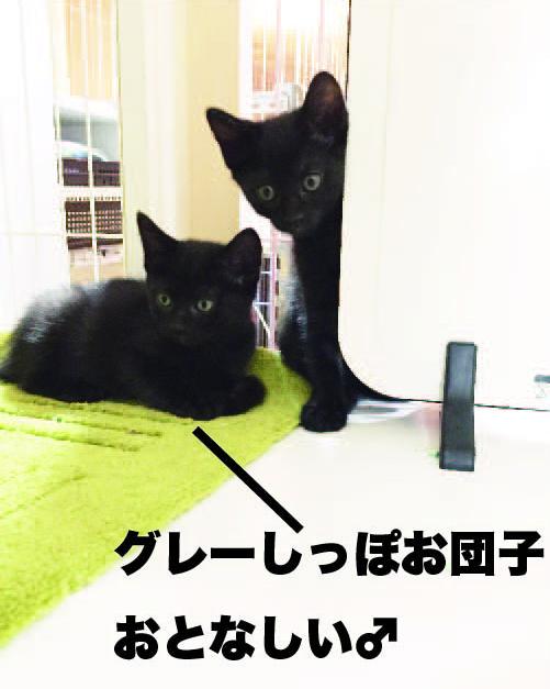 satsukig1.jpg