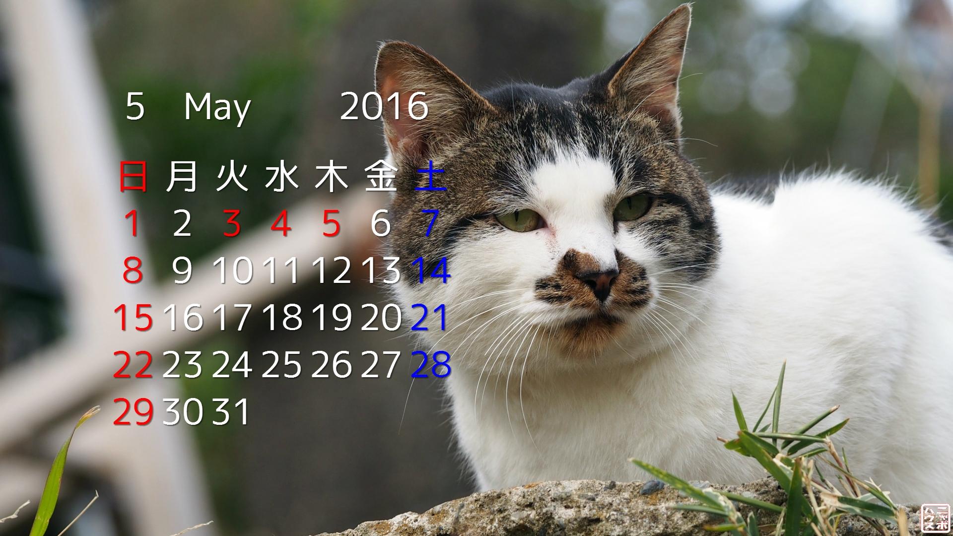 2016年 5月 猫デスクトップカレンダー