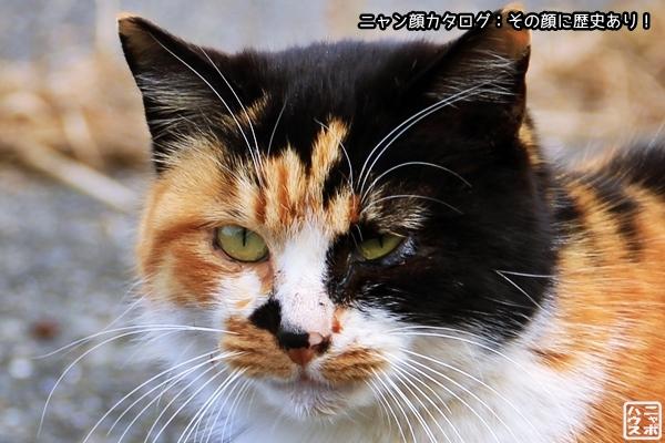 ニャン顔NO17 ミケ猫さん