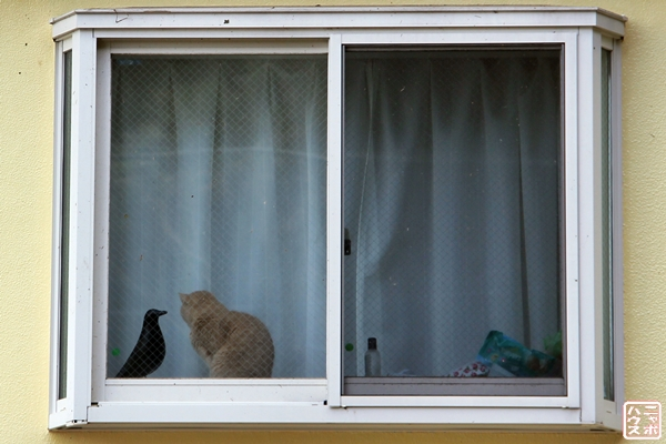 窓辺の猫さん