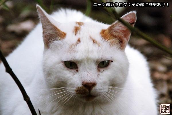 【ニャン顔】シロ猫さん