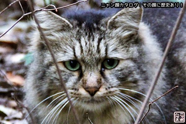 【ニャン顔】ペルシャ系猫さん