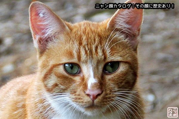 ニャン顔NO14 チャトラ猫さん