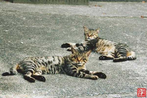 輩なキジトラ猫さん!