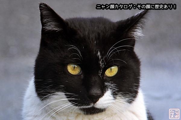 ニャン顔NO14 シロクロ猫さん