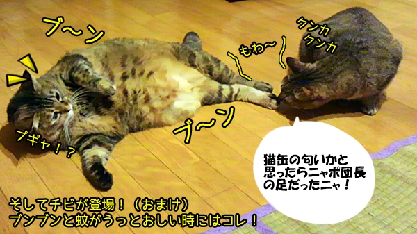 猫 蚊取り線香