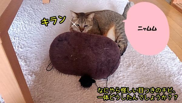 猫 ひとり遊び チビ