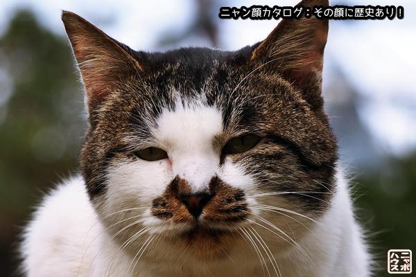 ニャン顔NO16 サバトラ猫さん