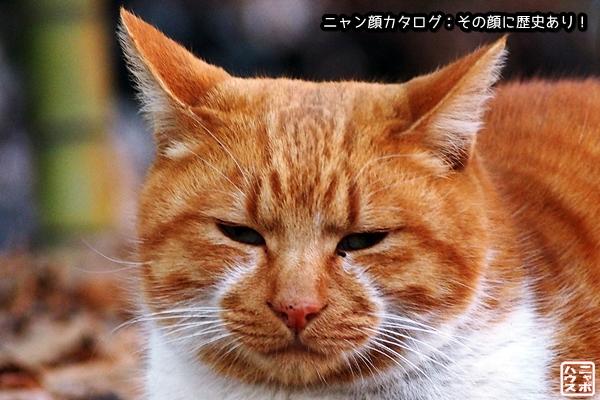 ニャン顔NO11 チャトラ猫さん