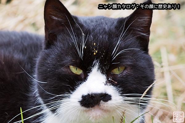 ニャン顔NO15 シロクロ猫さん