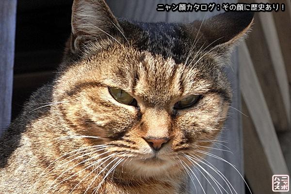 【ニャン顔】キジトラ猫さん
