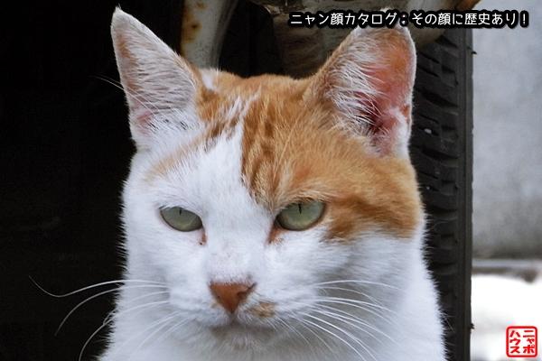 ニャン顔NO12 シロチャ猫さん