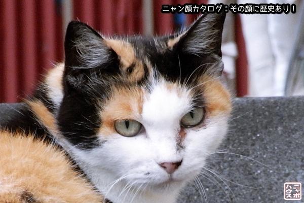 ニャン顔NO13 ミケ猫さん