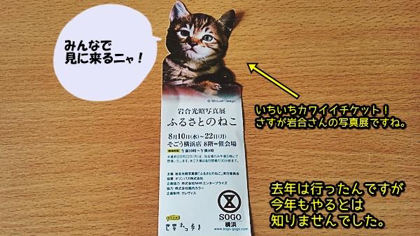 岩合光昭 写真展 ふるさとの猫 横浜
