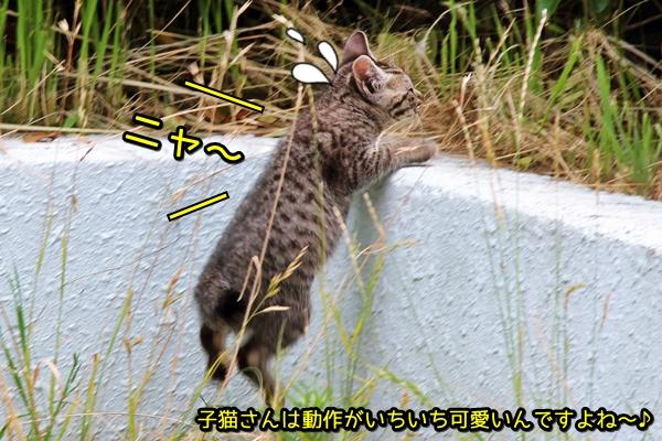 ニャポ旅21 名古屋 猫 後編