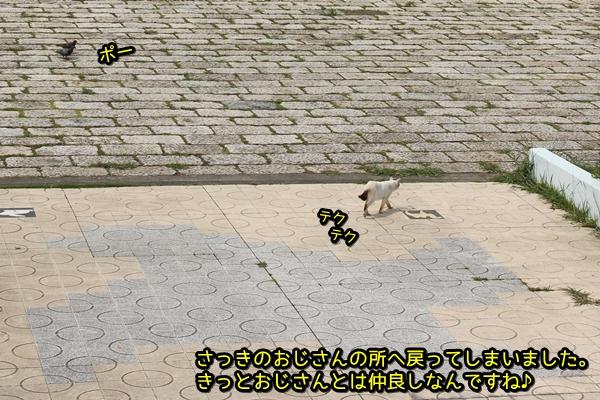 ニャポ旅21 名古屋 猫 前編