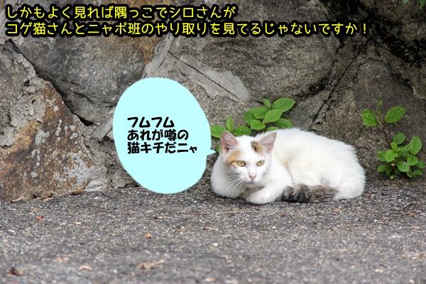 ニャポ旅26 尾道 猫