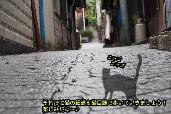 尾道 猫の細道へ ニャポ旅26 その3前編