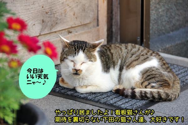 ニャポ旅19 伊豆下田 後編