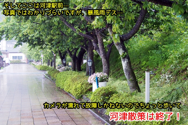 ニャポ旅19 暴風雨と晴天の伊豆下田 前