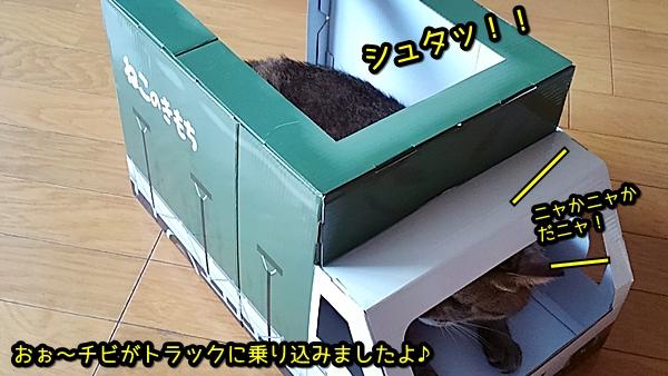 段ボールトラック 猫