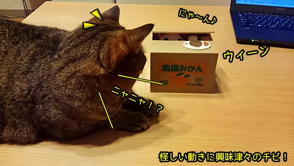 猫貯金箱 いたずらBANK(みけ)