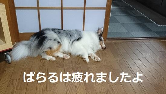 DSC_4689.jpg