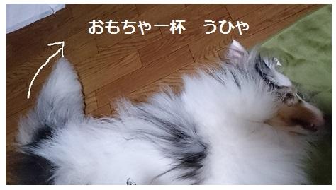 DSC_4988_2016062622512353a.jpg