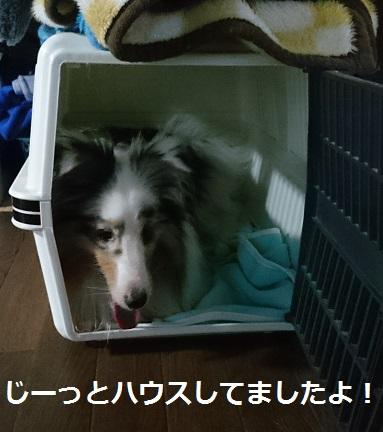 DSC_7040.jpg