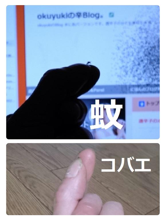 collage-1462549616752.jpg