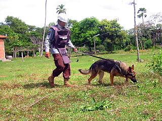 地雷探知犬の様子