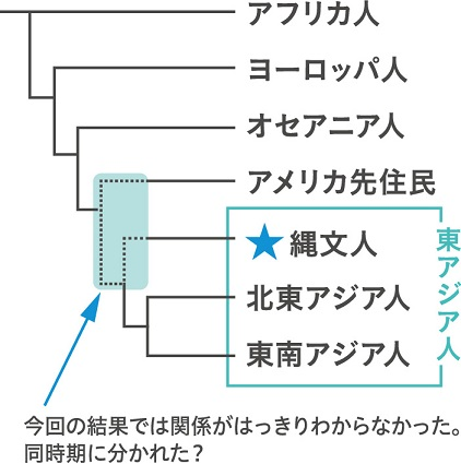 世界の現代人と縄文人の系統関係