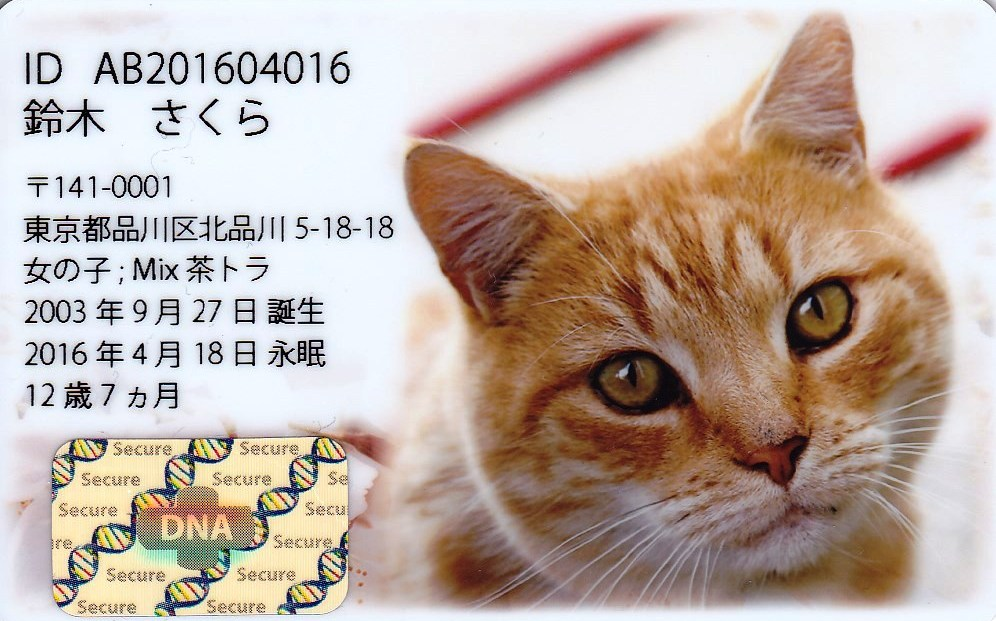 DNAカード見本猫